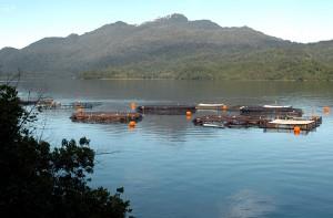 Los centros de cultivo de la salmonicutura han aportado como principal motor del crecimiento regional.