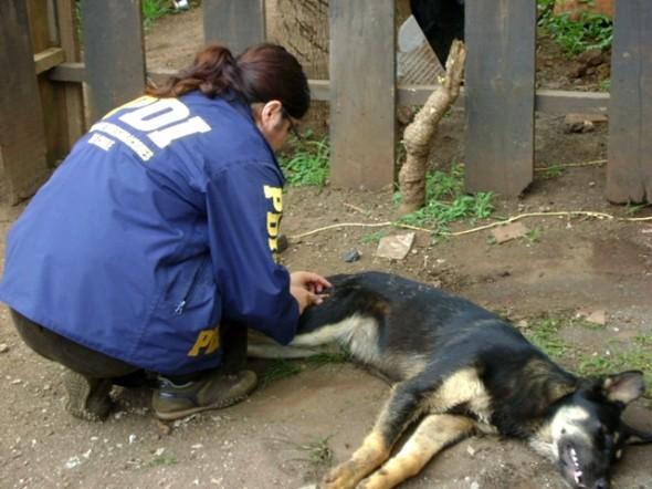 PDI inicia campaña tenencia responsables de mascotas