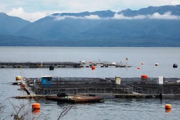 Uno de los centros de cultivo en los fiordos de la Región de Aysén.