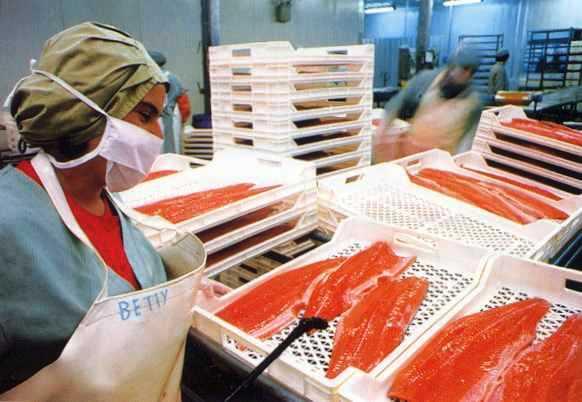 Aysén es una de las regiones que mostró mayor crecimiento en la producción de salmón para exportación. (www.sofofa.cl)