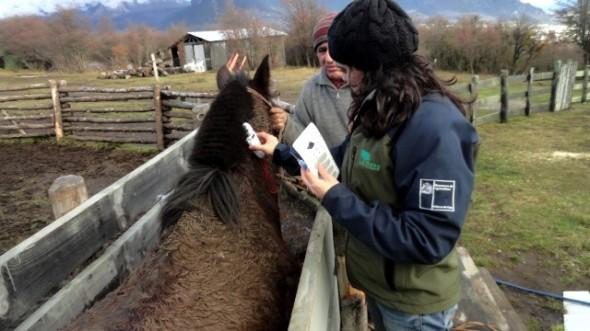Conaf moderniza sistema de identificación de equinos utilizados en labores de administración de las áreas silvestres protegidas