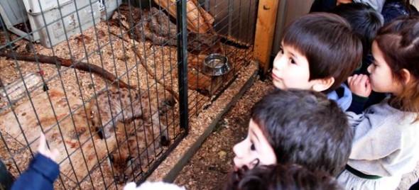 Niños en despedida rescate de pumas cachorras