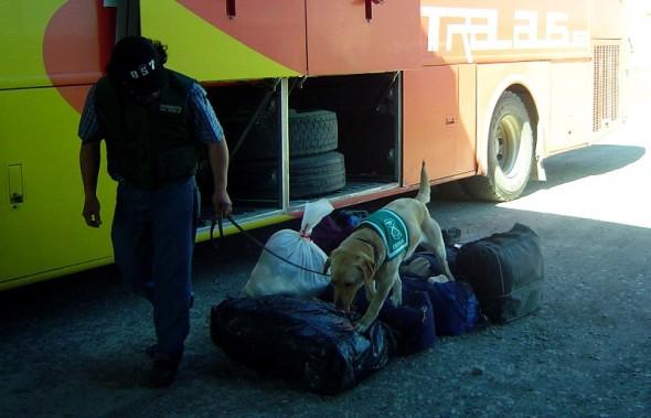 Can Melissa resgitrando bus