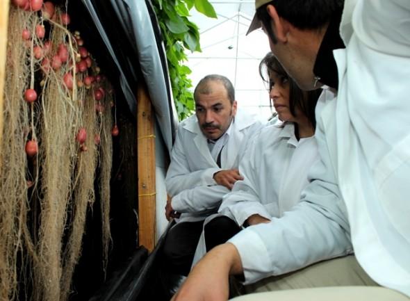 Autoridades visitaron innovador proyecto para la producción de papas en la región.