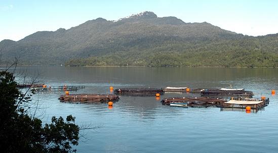 Cultivo Salmones Aysén Marine Harvest
