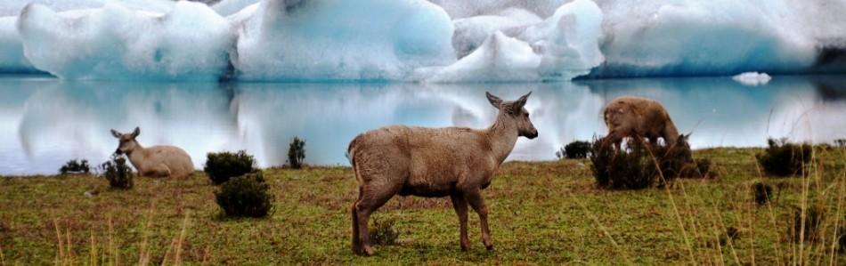 Huemul Aysen glaciar Slide