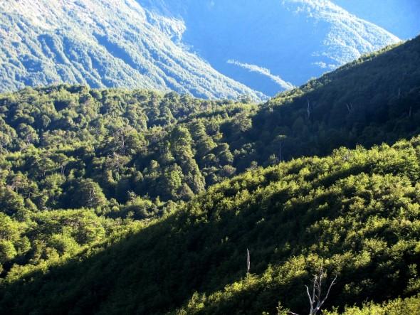 Bosques Nota