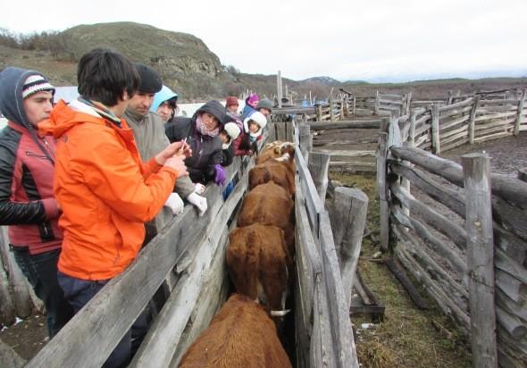 Capacitación de enfermería de ganado.