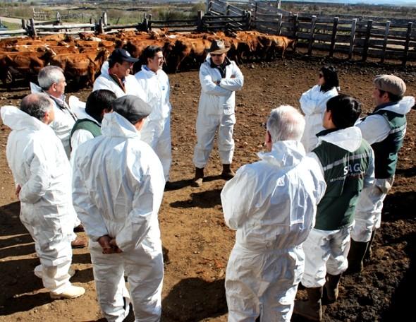 bovinos-a-turquia