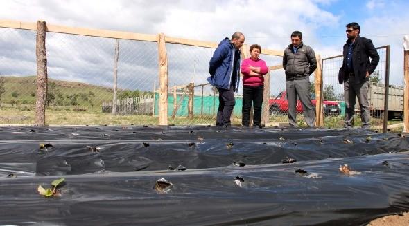 autoridades-visitaron-huerto-de-frutillas